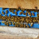 Why Beekeeping