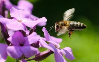 Bee Collect Nectar